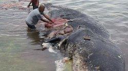 Điều gây rùng mình trong bụng cá voi dài 9m dạt bờ ở Indonesia
