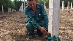 Quảng Trị: Dự án trồng thanh long ruột đỏ được ủng hộ, tin tưởng