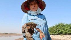 Về Quảng Yên thưởng thức đặc sản ngon cua biển đặc biệt khó cưỡng