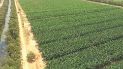 Quyền và lợi ích của hộ nông dân trong tích tụ và tập trung ruộng đất