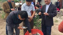 Nuôi cá rô phi theo hướng VietGAP: Giảm chi phí, giá bán cao