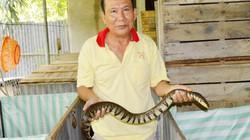 Lạ mà hay: Nhốt đàn rắn trong thùng gỗ, mỗi tháng lời hơn 9 triệu