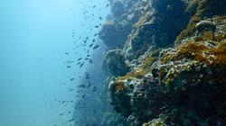 Sinh vật kỳ lạ sống ở đáy Thái Bình Dương có thể cứu thế giới?
