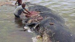 NÓNG nhất tuần: Điều đáng sợ khi mổ bụng cá voi 9m dạt bờ ở Indonesia