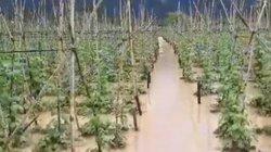 Lâm Đồng: 70ha hoa màu bị ngập do ảnh hưởng bão số 9