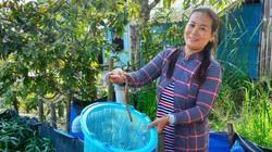 Kiên Giang: Dân đổi đời nhờ nuôi lươn đồng trong bồn cao su