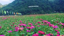 """""""Lịm tim"""" trước vẻ đẹp thung lũng hoa lớn nhất Việt Nam ở xứ Lạng"""