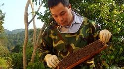Nuôi ong lấy mật không chỉ thoát nghèo mà còn thành triệu phú