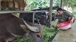 """Nông thôn xứ Tuyên """"thay áo mới"""", nông dân giàu lên nhanh"""
