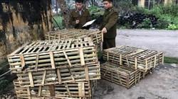 NÓNG: Bắt giữ 850kg mèo nhập lậu qua đường mòn biên giới