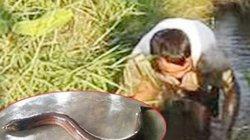 Thọc tay xuống rãnh nước sâu một cách điệu nghệ để bắt con trơn trơn