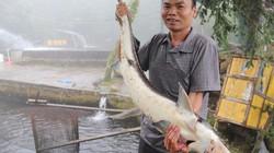 """Lãi 3 tỷ đồng/năm đều như """"vắt chanh"""" nhờ nuôi cá trên đỉnh mây mù"""