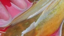 Nam Định: Đã mắt ngắm đàn cá vàng như nghệ, thu trăm triệu/năm