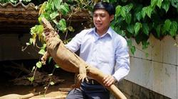 Quảng Nam: Thoát nghèo, làm giàu nhờ nuôi những con kỳ lạ