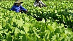 """Quảng Ngãi: Nông nghiệp tập trung 3 """"trụ cột"""" sạch, an toàn, bền vững"""