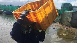 Tôm hùm chết hàng loạt, dân Cam Ranh rầu rĩ bán chạy giá bèo