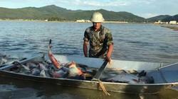 """Nửa năm nuôi cá, nửa năm trồng lúa, ruộng hoang biến thành """"vàng"""""""