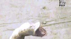 Kết cục khó tin khi rắn tham lam nuốt liền 4 quả trứng