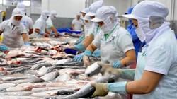 Trung Quốc nuôi cá tra, doanh nghiệp Việt bắt đầu lo thị trường