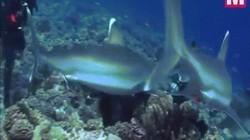 Video: Thợ lặn bị 6 cá mập bao vây, cắn thẳng vào mặt