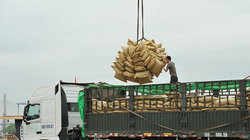 Liên tiếp trúng nhiều gói thầu, xuất khẩu gạo đạt con số ấn tượng
