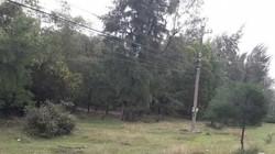 """Vụ nhiều cán bộ được cấp đất rừng: Sự """"siêu tốc"""" bất thường"""