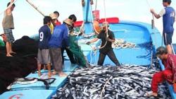 3 tàu cá của ngư dân Việt Nam gặp nạn gần đảo Hải Nam, Trung Quốc