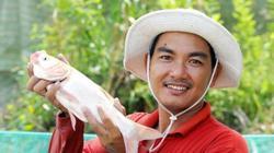 """Mô hình ngon ăn, """"độc nhất vô nhị"""" ở miền Tây: Nuôi cá ruộng mùa lũ"""