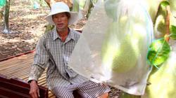 BR-VT: Người dân mang giường ra vườn ngủ canh trộm mít
