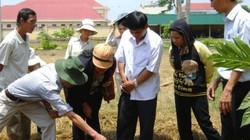 Học nghề xong, hàng nghìn hộ nông dân thành hộ sản xuất giỏi