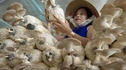 """""""Đột nhập"""" trang trại trồng nấm bào ngư lớn nhất huyện đảo Phú Quốc"""