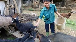 Giữa thung lũng nuôi con đặc sản vươn lên thành triệu phú