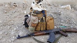 Chú chó đi qua 5 nước và 2 vùng chiến sự để được đoàn tụ với ân nhân