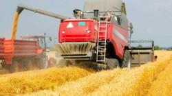 Bỏ ngành Y về quê làm nông, chàng thanh niên thu nhập hàng tỷ đồng mỗi năm