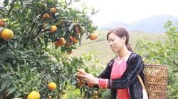 Sơn La: Tỷ lệ hộ nghèo giảm 3,78% so với năm trước
