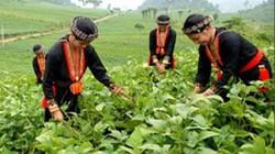 Điện Biên: Giúp 3.558 hộ thoát nghèo