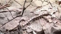 Chiêm ngưỡng bông hoa gần 200 triệu năm tuổi đã hóa thạch