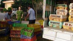 Bộ NNPTNT ra công điện khẩn: Kiểm soát chặt nhập khẩu gia cầm