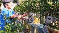 Khám phá vườn quất cảnh cực độc lạ, làm dân chơi phát thèm ở Thủ đô