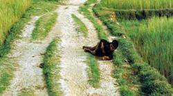 Thảm sát Mỹ Lai (Kỳ 2): Những câu chuyện hậu thảm sát Mỹ Lai
