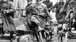 Tiết lộ sốc lực lượng cảnh sát bí mật của Đức quốc xã