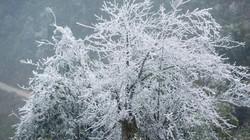 Miền Bắc sắp đón đợt rét khốc liệt, khả năng xảy ra mưa tuyết