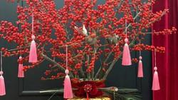 Kỳ lạ hoa đào đỏ au bán gần triệu đồng một cành dịp Tết Dương lịch