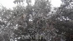 Băng tuyết bắt đầu xuất hiện phủ trắng Mẫu Sơn