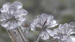 Những hình ảnh tuyệt đẹp băng giá bao trùm cây cỏ ở Mẫu Sơn