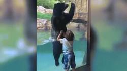 Thích thú xem gấu đen nhảy múa cùng cậu bé 5 tuổi trong vườn thú