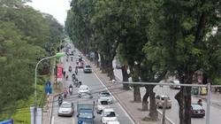 """Ngắm hàng cây ở Thủ đô sắp bị """"khai tử"""" trong ngày đầu năm mới"""