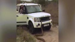 Video: Trăn khổng lồ dài 5 mét đuổi theo du khách gây hãi hùng