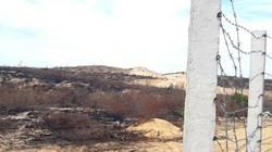 """Vụ """"tàn sát"""" 140ha rừng ở Bình Định: Trách nhiệm chủ dự án ở đâu?"""
