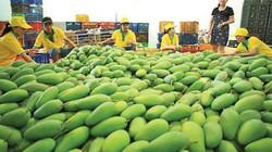 Diễn đàn Nông dân Quốc gia lần thứ 4: Hiến kế xuất khẩu nông sản